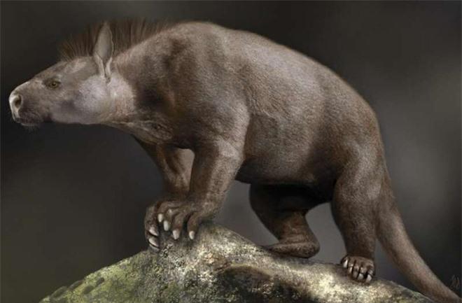 Nghiên cứu mới cho thấy sự tiến hóa của mắt cá chân và bàn chân đã giúp động vật có vú vươn lên chiếm lĩnh Trái Đất - Ảnh 2.