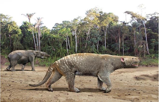 Nghiên cứu mới cho thấy sự tiến hóa của mắt cá chân và bàn chân đã giúp động vật có vú vươn lên chiếm lĩnh Trái Đất - Ảnh 3.