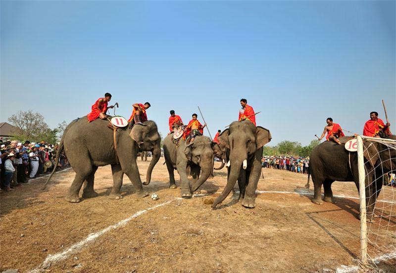 Cuộc thi voi đá bóng ở lễ hội Văn hóa truyền thống các dân tôc. Ảnh: Diem Dang Dung.