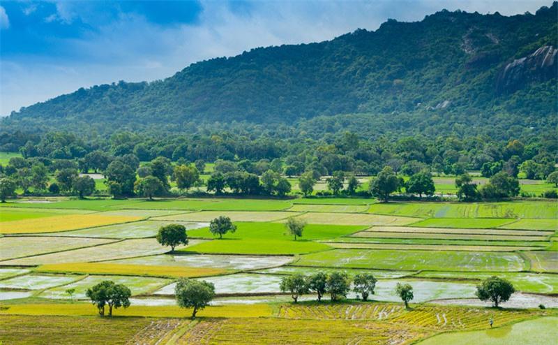 Tới nơi đây, du khách còn có dịp thăm viếng chùa Chưn Num, hồ Tà Pà, thưởng thức đặc sản gạo nàng nhen, gạo lúa sóc, ăn sáng với món cháo bò độc đáo thơm mùi trái trúc hoang dã, xem lễ hội đua bò Bảy Núi vào khoảng trung tuần tháng 8-9 Âm lịch… Ảnh: Thanh Long.