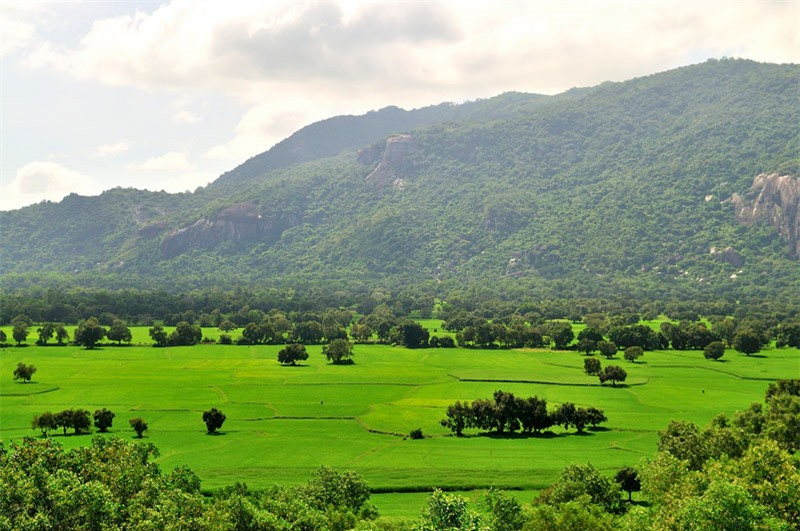 Nhìn từ trên cao, cánh đồng Tà Pạ như một tấm thảm xanh ngút ngàn màu lúa non, lác đác điểm tô bằng những ngọn thốt nốt cao vút. Ảnh: Diem Dang Dung.