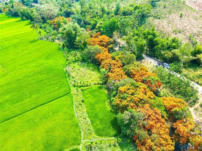 Hoa trang rừng phủ kín suối Tà Má - Ảnh 1.