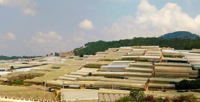Nhiều công trình nhà kính lấn đất lâm nghiệp.