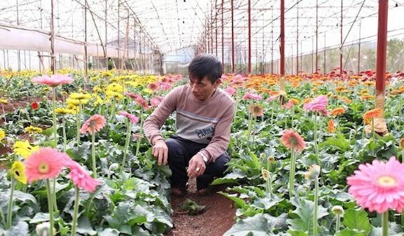 Người trồng hoa Đà Lạt gặp nhiều khó khăn do ảnh hưởng của dịch Covid-19.