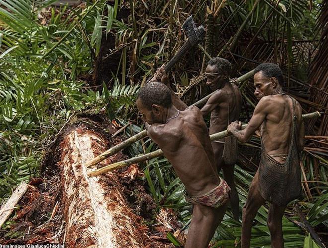 Hình ảnh hiếm hoi về người Korowai - bộ lạc mà thế giới suýt không biết đang tồn tại - Ảnh 12.