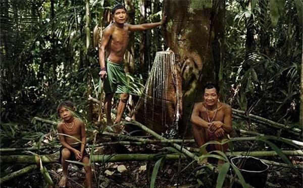 Lạ lùng bộ lạc trong rừng thẳm chỉ ngủ 30 phút, không có số đếm 1