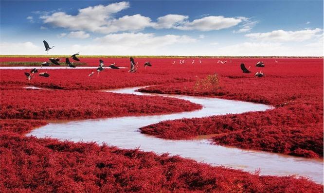 Biển đỏ