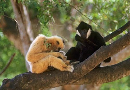 Vườn Quốc gia Bến En: Điểm du lịch khám phá đầy hấp dẫn