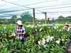 TP.HCM: Đến năm 2030, 80% doanh nghiệp nông nghiệp sẽ ứng dụng công nghệ cao trong sản xuất
