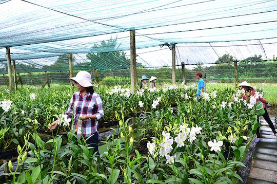 Mô hình trồng hoa lan ứng dụng công nghệ cao ở huyện Bình Chánh.