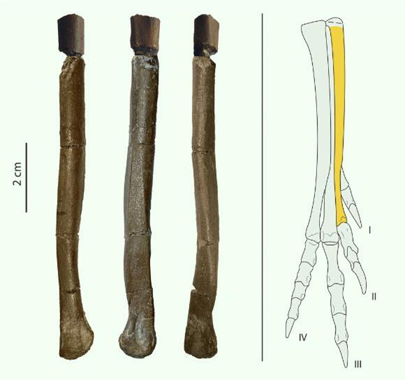 Một loài khủng long mới được phát hiện tại Tây Ban Nha có vẻ ngoài gần giống như loài chim hiện đại - Ảnh 3.
