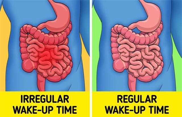 Thức dậy đúng giờ giúp tăng khả năng miễn dịch - Ảnh 7.