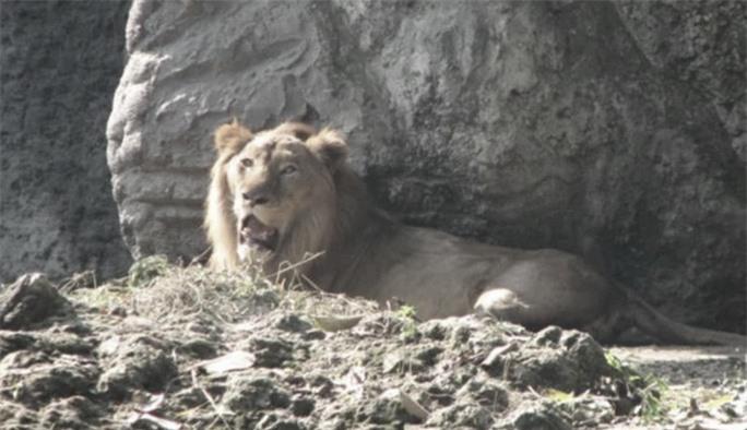 Hết chuyện đi ghẹo sư tử, đệ tử Lưu Linh gặp may lớn - Ảnh 1.