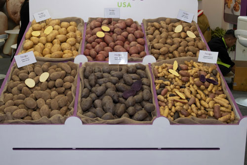 Sai lầm khi ăn khoai tây gọt bỏ vỏ 1 Vỏ khoai tây chứa nhiều protein, vitamin và khoáng chất