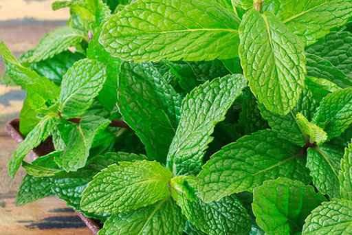 7 loại cây dễ trồng trong nhà vừa lọc sạch không khí lại làm thuốc chữa bệnh