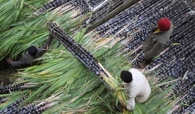 Việt Nam áp thuế chống bán phá giá với đường mía Thái Lan ở mức 47,64%