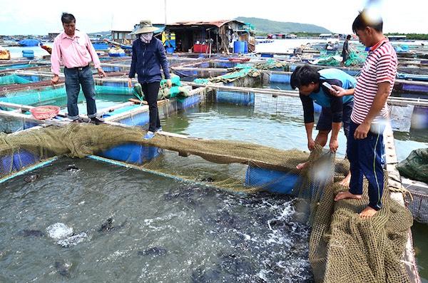 Bà Rịa - Vũng Tàu: Hàng trăm tấn hải sản không có người mua, ngư dân như
