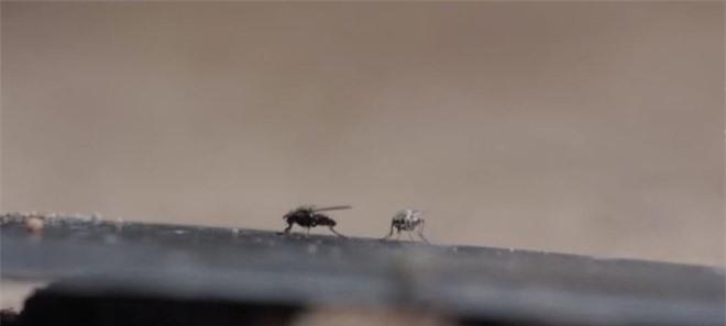 Vụ án chấn động thời Tống: Sử dụng ruồi phá án, chuyên gia pháp y khiến sát nhân hành động lạ tại hiện trường - Ảnh 4.