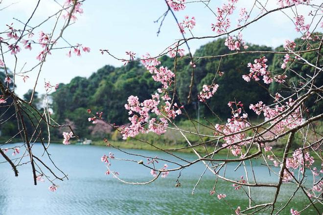 """Hồ Đắk Ke là địa điểm thơ mộng, lãng mạn ở Măng Đen với những hàng phượng tím, mai anh đào dịu dàng khoe sắc. Theo Cổng TTĐT Kon Tum, tên gốc của hồ là Toong Rơ Poong, vốn được nhắc đến qua truyền thuyết """"7 hồ, 3 thác"""" phổ biến ở vùng đất này. Ảnh: Bìn Bìn."""