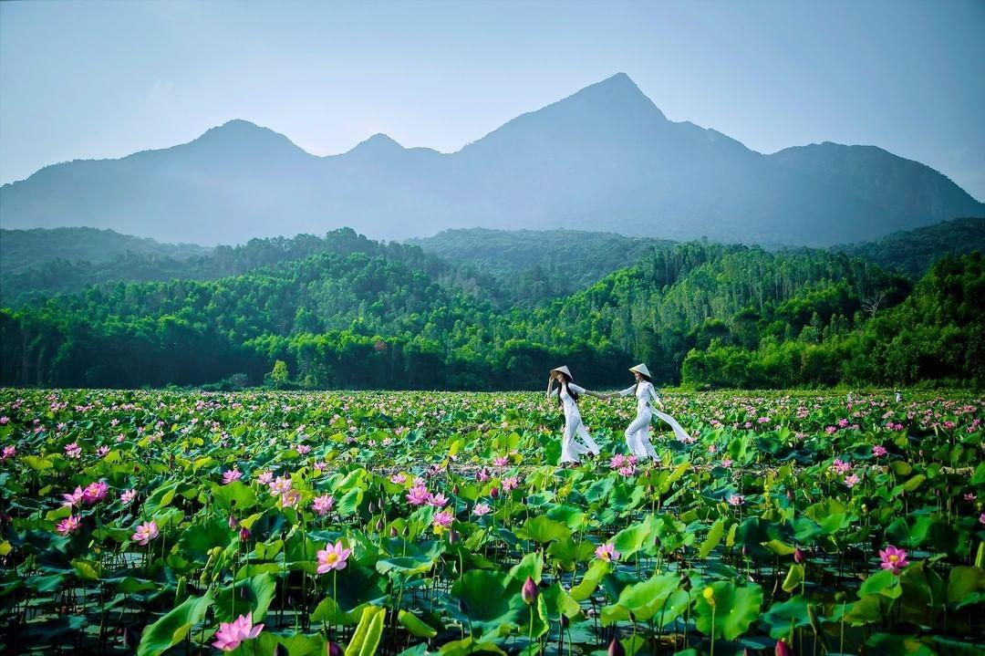 Theo chia sẻ, thời điểm ngắm sen đẹp nhất thường bắt đầu từ 6-9 giờ sáng, khi những cánh sen bung nở khoe sắc và những giọt sương mai vẫn còn long lanh trên lá, tạo nên bức tranh thiên nhiên hòa hợp về màu sắc. Ảnh: Vietnam_travel_media.