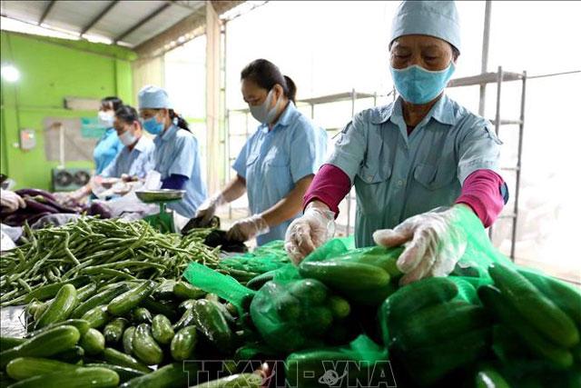 Triển vọng hợp tác nông nghiệp Việt Nam và Tanzania