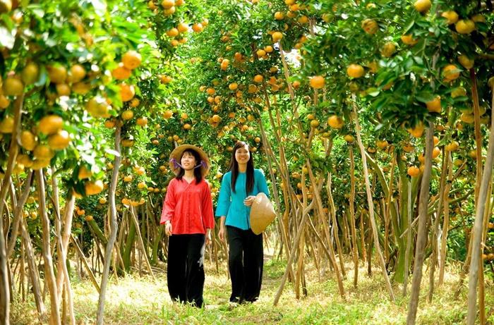 Cái Mơn, Chợ Lách, Bến Tre là nơi sản xuất cây ăn quả lớn nhất miền Tây. Đến đây, du khách sẽ được thưởng thức tận vườn các loại quả thơm ngọt như xoài cát, bưởi da xanh, nhãn tiêu, chôm chôm… Ngoài ra, bạn cũng có thể mua các loại trái cây về làm quà cho bạn bè, gia đình với mức giá hợp lý. Ảnh: Du lịch Việt Nam.