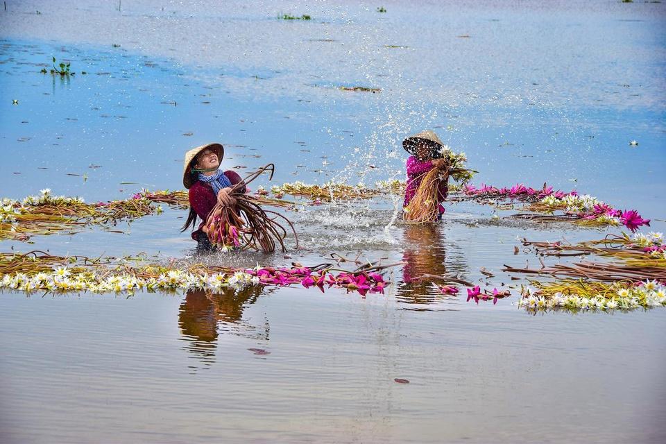 Mùa nước nổi vùng Đồng bằng sông Cửu Long thường bắt đầu từ tháng 8 đến tháng 11 hàng năm. Lúc này, những cánh đồng xanh chìm trong biển nước mênh mông, tạo nên khung cảnh bình dị hút hồn du khách. Đây cũng là mùa bội thu tôm cá với người dân miền Tây. Du khách có cơ hội thưởng thức đặc sản mùa nước nổi như lẩu mắm, bánh xèo bông điên điển... Ảnh: Hoaco13.