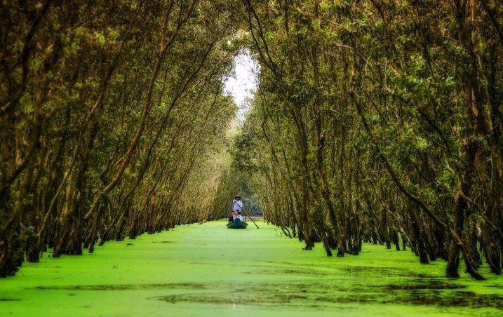 Rừng tràm Trà Sư (An Giang) là điểm đến không thể bỏ qua khi du lịch miền Tây mùa nước nổi. Du khách sẽ được lên xuồng ba lá, xuôi theo con nước, dọc hai bên là rừng tràm, các loài động thực vật theo mùa. Rừng tràm và những mảng bèo xanh kín mang lại cho du khách cảm giác mát mẻ, thư giãn, hòa mình vào thiên nhiên. Ảnh: Chinnyplus.