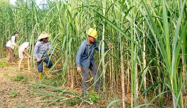 Thông điệp hợp tác của Thái Lan sau khi Việt Nam áp thuế chống bán phá giá với mía đường