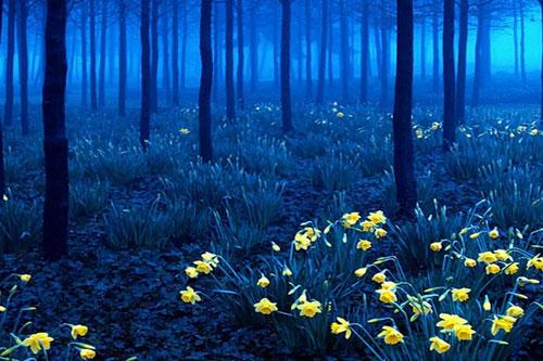 Bí ẩn những khu rừng không phải ai cũng dám đặt chân tới