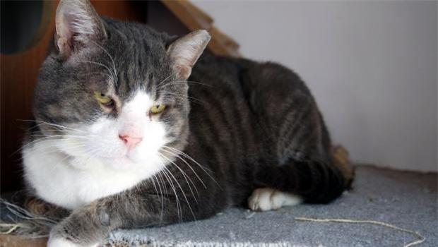 Những siêu sao giảm cân trong thế giới chó mèo - 11