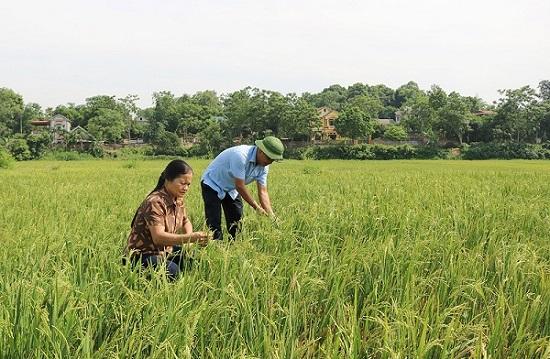 """Cục Bảo vệ thực vật và Viettel xây dựng app giúp nông dân """"tự bắt bệnh"""" cho lúa"""