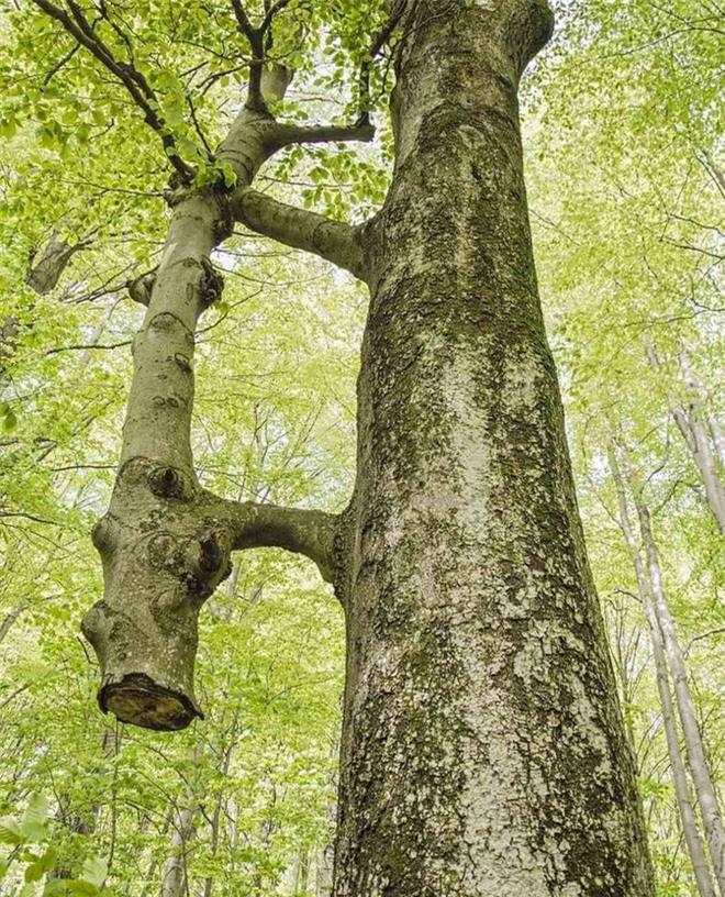 13 bức ảnh hiếm có khó tìm của thiên nhiên mà bạn phải may mắn lắm mới được chiêm ngưỡng - Ảnh 9.