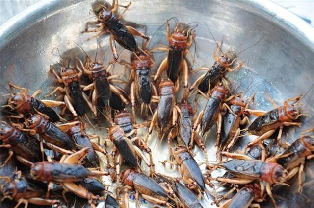Món đặc sản thử thách lòng can đảm của người ăn ở vùng Long Khánh - Ảnh 4.