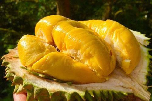 Ăn sầu riêng rất tốt nhưng ăn với thứ này thì