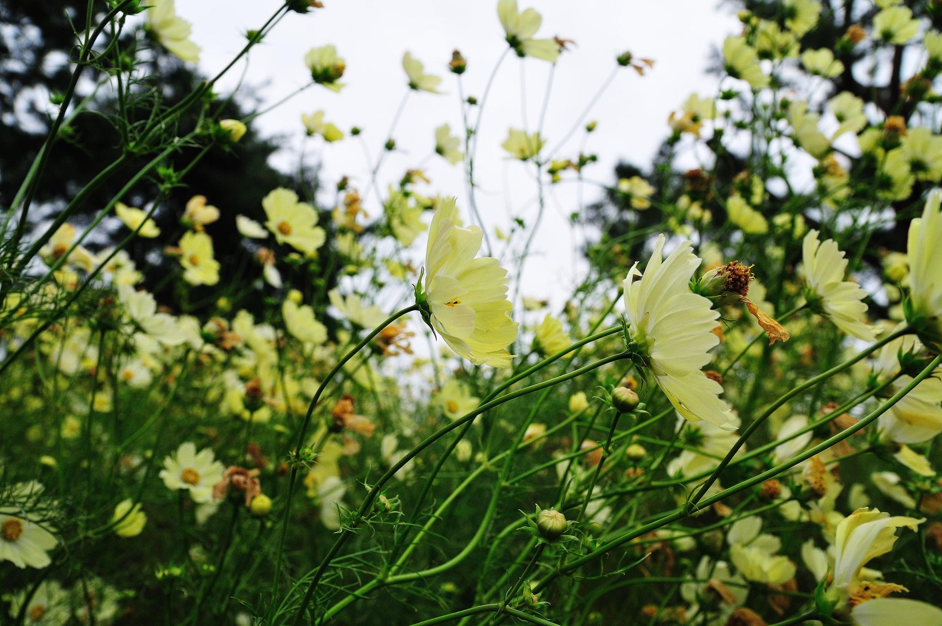 Ngoài ra, công viên cũng có đa dạng các loài thực vật và hoa khác như hoa hồng tuyết, cam thảo, loa kèn đỏ… nở quanh năm. Ảnh: Ajari.