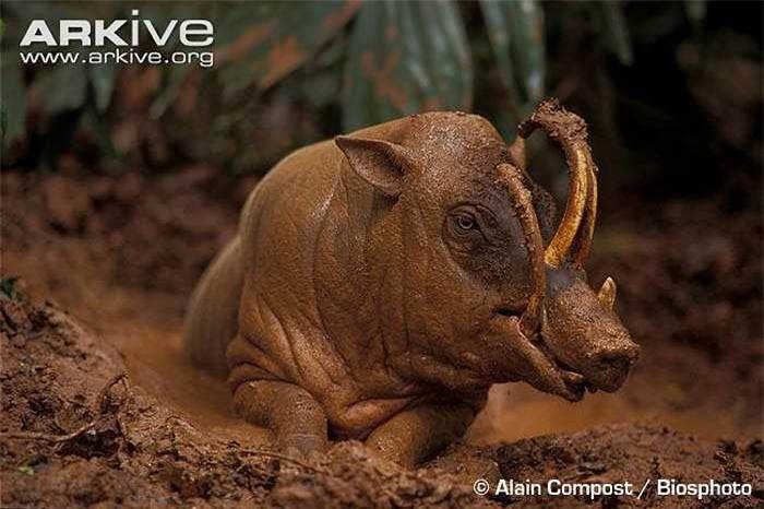 Chúng có ít hoặc không lông, lớp da lốm đốm màu nâu và xám, tạo điều kiện thuận lợi cho sự ngụy trang của chúng.