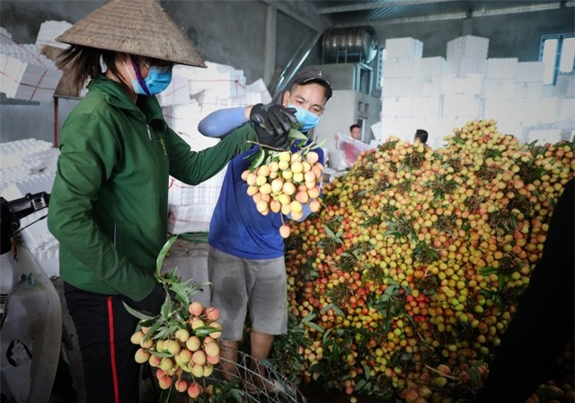 Bắc Giang thành công trong tiêu thụ vải thiều bất chấp COVID-19 - Ảnh 1.