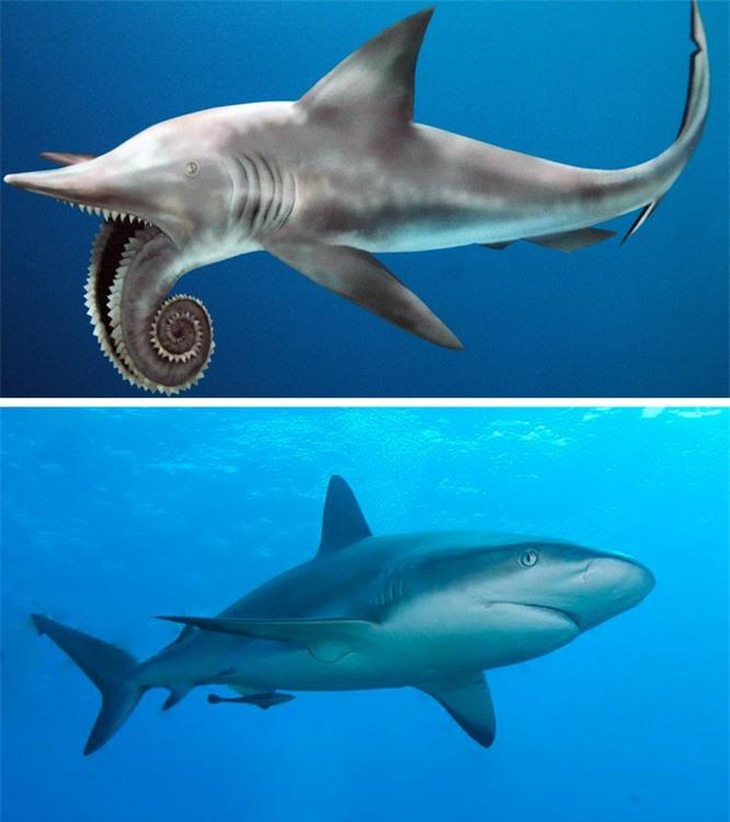 Các loài động vật đã tiến hóa như thế nào ? ảnh 10