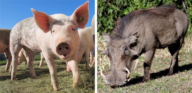 Các loài động vật đã tiến hóa như thế nào ? ảnh 2