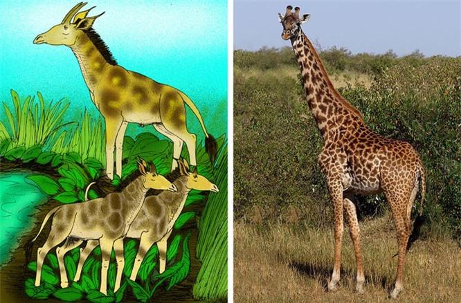 Các loài động vật đã tiến hóa như thế nào ? ảnh 4