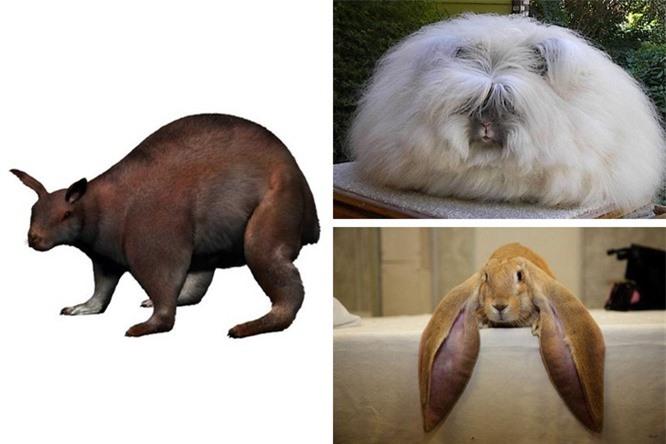 Các loài động vật đã tiến hóa như thế nào ? ảnh 7