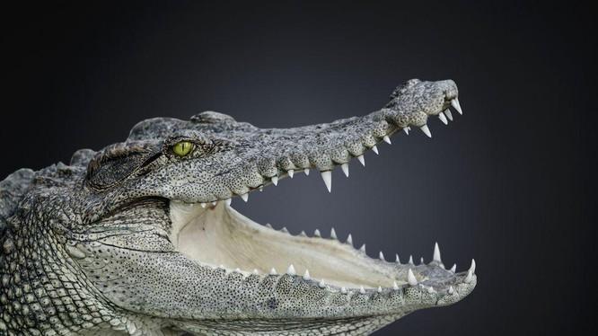 Cá sấu không thay đổi hình dáng trong suốt 200 triệu năm qua (Ảnh: Popular Mechanics)