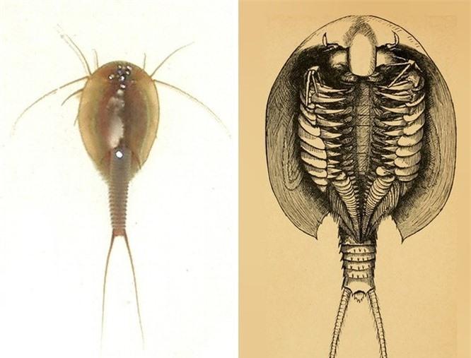 8 sinh vật bí ẩn gây xôn xao dư luận ảnh 4