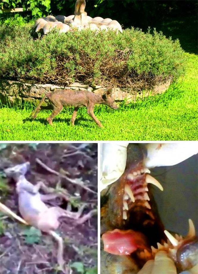8 sinh vật bí ẩn gây xôn xao dư luận ảnh 5
