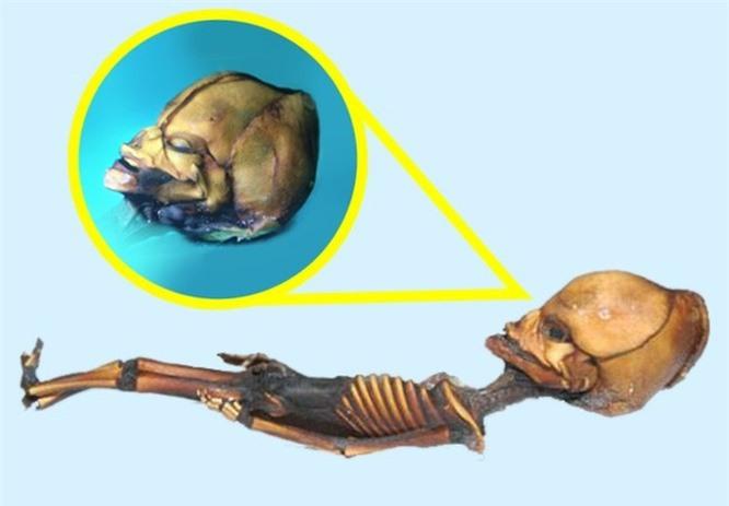 8 sinh vật bí ẩn gây xôn xao dư luận ảnh 6