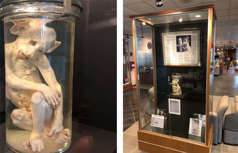 """""""Con khỉ sao Hỏa"""" và những bài báo thời điểm đó vẫn được trưng bày tại bảo tàng của Cục Điều tra bang Georgia."""