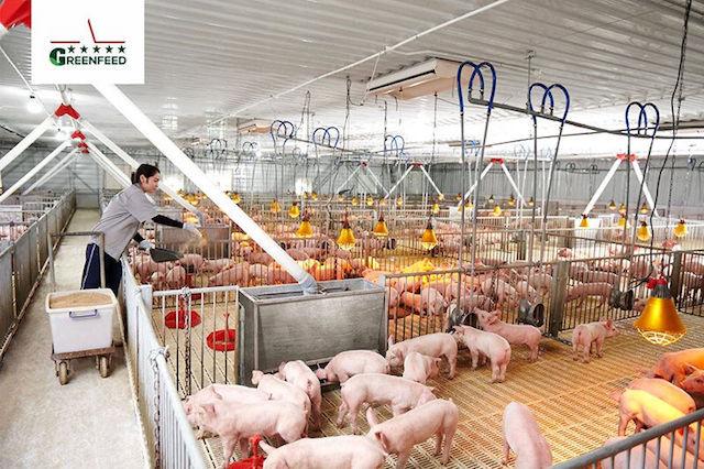 Trang trại chăn nuôi của GREENFEED Việt Nam.