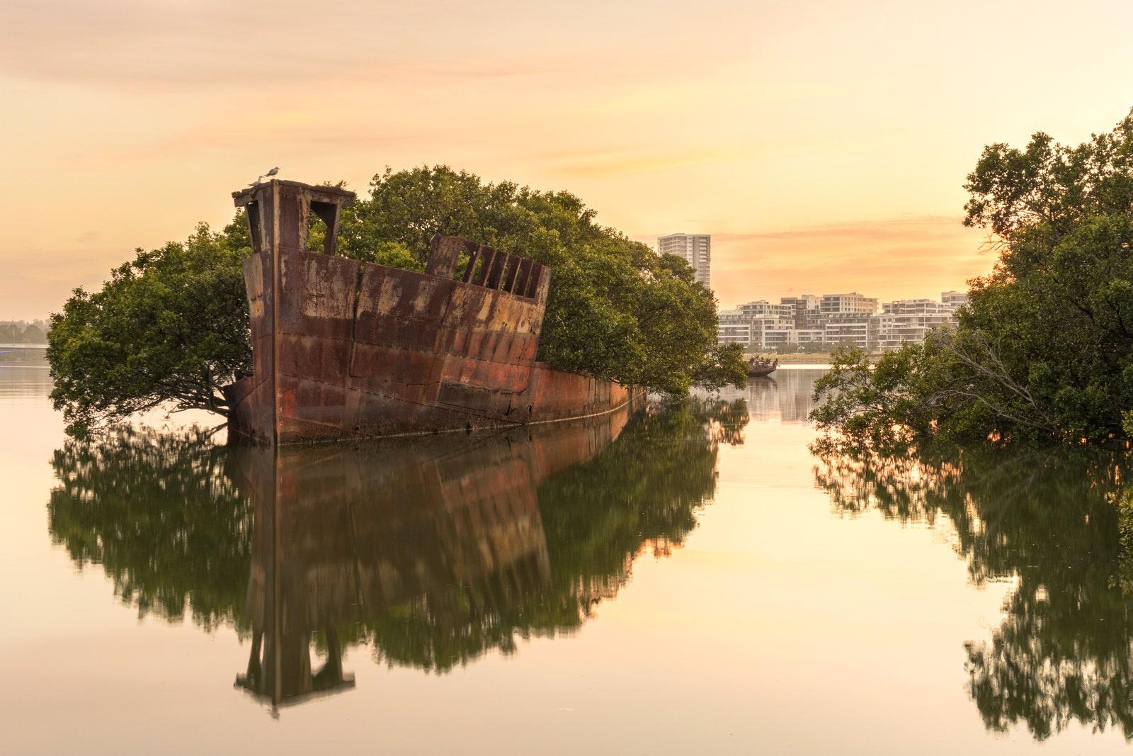 """Cây rừng ngập mặn phủ kín con tàu hơn trăm tuổi ở Australia là hình ảnh ấn tượng thu hút du khách khắp thế giới. Người dân vịnh Homebush gọi nơi đây là """"rừng nổi"""". Ảnh: Getty."""