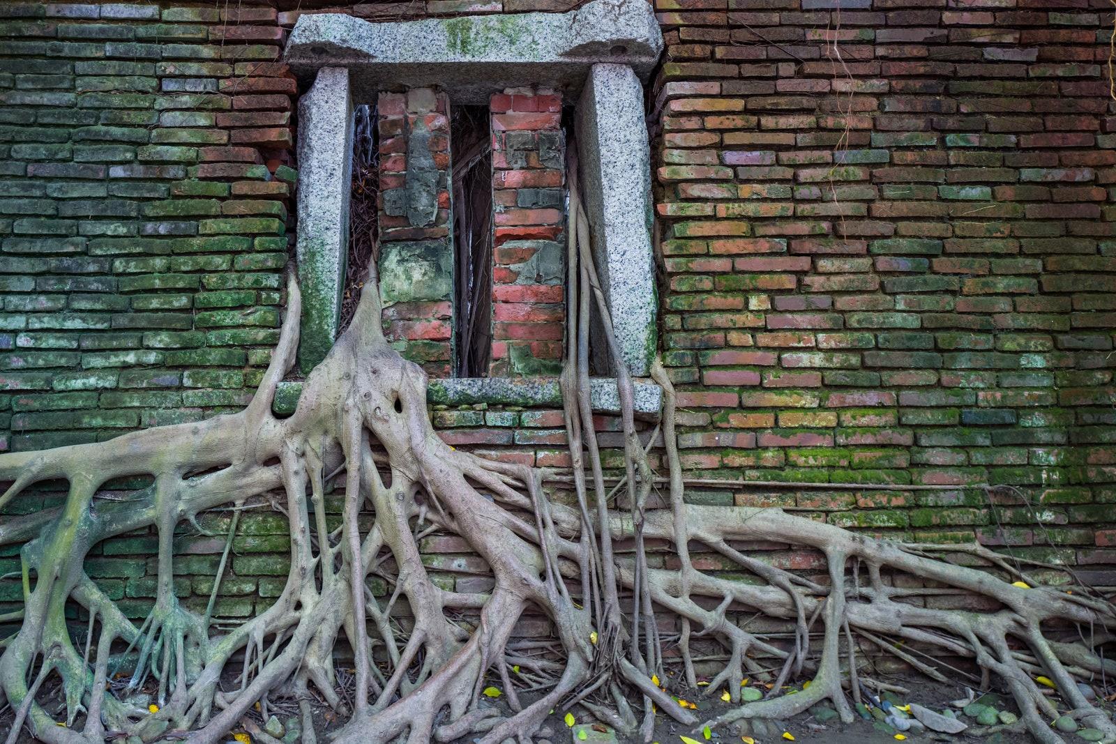 """Ban đầu, nơi đây là nhà kho thuộc sở hữu của người Anh và bị bỏ trống vào khoảng thế kỷ 19. Một cây đa cổ thụ gần đó đã đâm xuyên qua các bức tường gạch và sàn bê tông của tòa nhà, tạo ra """"ngôi nhà trên cây"""" độc đáo. Ngày nay, du khách có thể khám phá điểm đến kỳ lạ chỉ với 1,7 USD. Ảhh: Getty"""